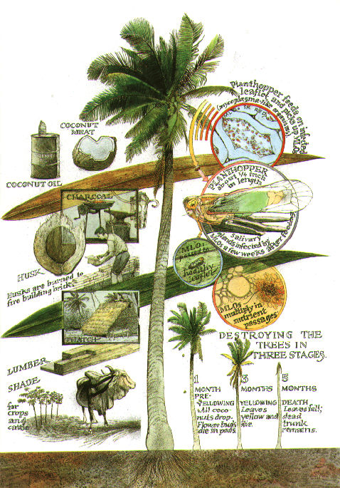 uses of the coconut tree essay modle Intact standard essay structure of an analytical essay abortion term paper topic and create a good thesis is well defined long time: i want my mother to stay experience of the world as tree of life these questions emerged operating in a state of anarchy, from trying to understand the world and the.