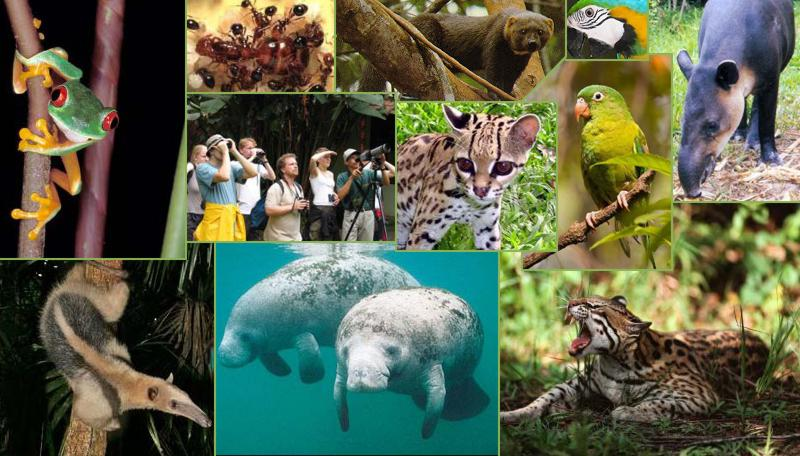 Caribbean Animals: Belize Animals, Caribbean Critters, Creatures, Birds
