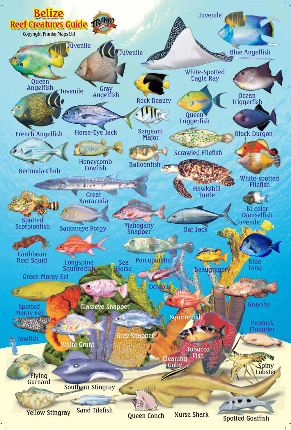 Belize Maps, Dive/Fish...