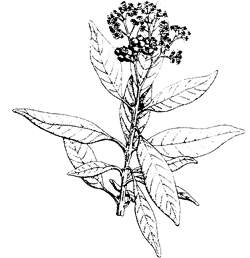 VEGETATION OF BELIZE Belize Botany