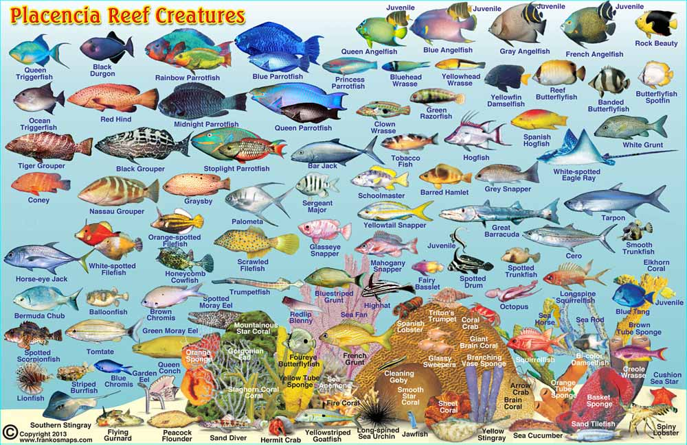 Reef fish guide.