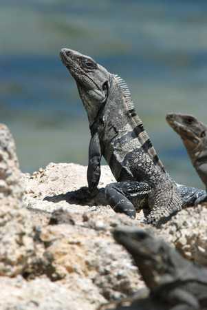 little Lizards.jpg