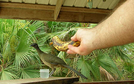 mailed bird.jpg
