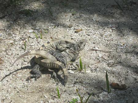 two lizards ummm.jpg
