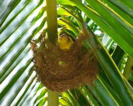 babybird1.jpg