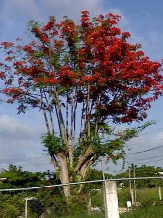 18-07-07_May tree(my fire tree.jpg