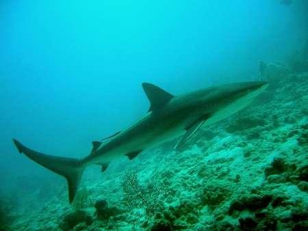 Shark_at_Blue_Hole_in_June_07.jpg