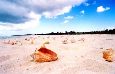 West Ambergris Caye - small.JPG