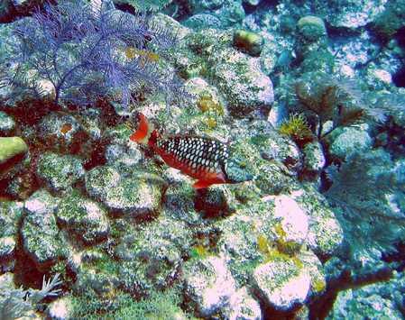 parrot fish.jpg