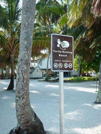 Nesting_Beach,_Tobacco_Caye.jpg