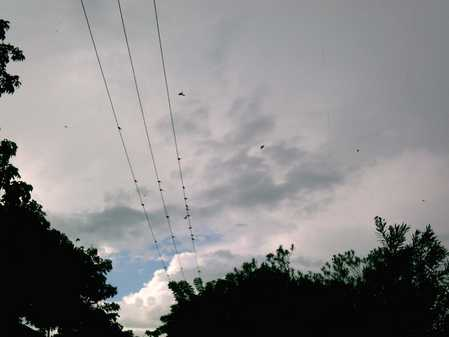 Birds on a wire after the storm