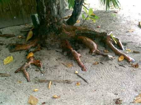 I love the Gumbo Limbo trees, especially the roots that make it look like the tree is trying to crawl away.