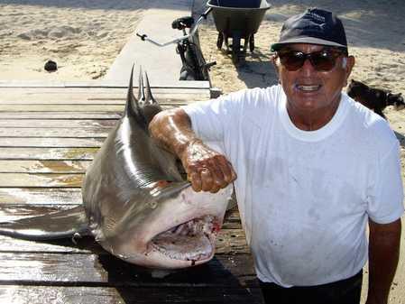 Juan Alamilla Shark.jpg