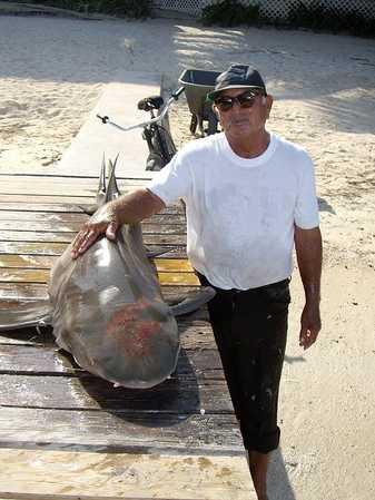Juan Alamilla Shark1.jpg