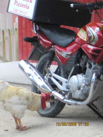 Pizza, Rooster, Bike.JPG