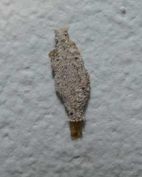 Cement bug.jpg