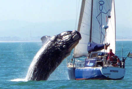 Whale_Sailboat1.jpg