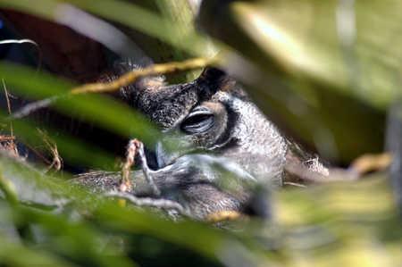 1 eye 2 horns and beak.jpg