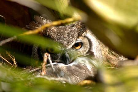 2 eyes beak full on right horm spread.jpg