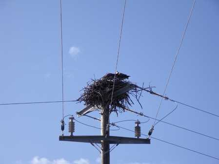 Belize Eagle Nest.jpg