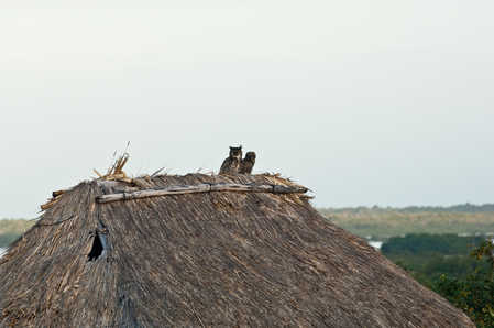 Owls on the Captain Morgans roof.