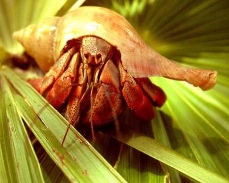 Hermit Crab looking at me