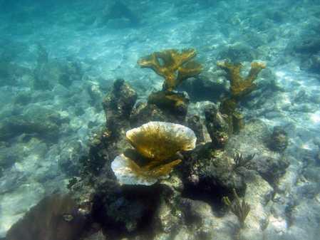 coraloutplant.jpg