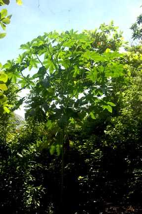 UNNOWN TREE 4258 X.jpg