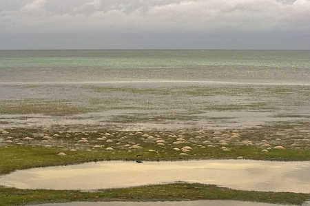 On Ambergris Caye this morning Northern winds are creating unusually low tides exposing tidal pools not normally seen.  Elbert