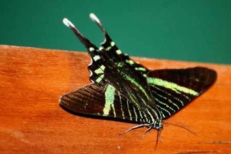 Moth 4454.jpg