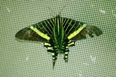 Moth 4465.jpg