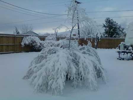 Snow 3-18-12.JPG