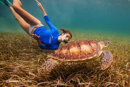 kate-walsh-belize-turtle-oceana.jpg