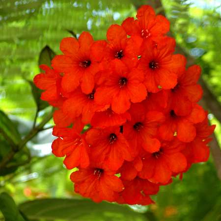 Cluster of red flowers