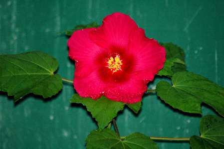 DSC_2919  MYSTERY FLOWER  X.jpg