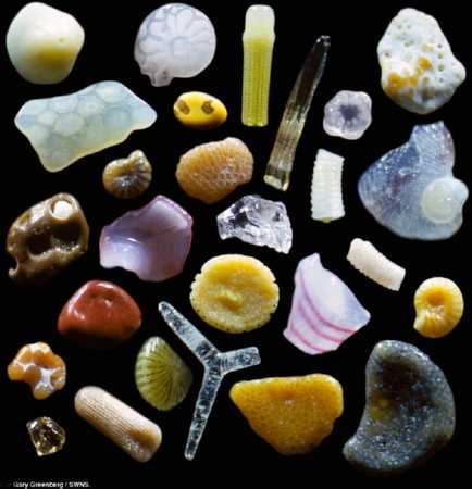 sand magnified.jpg
