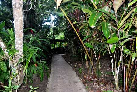 PATH LINED WITH GINGER PLANTS