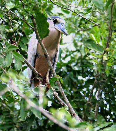 hideing in the mangrove.jpg