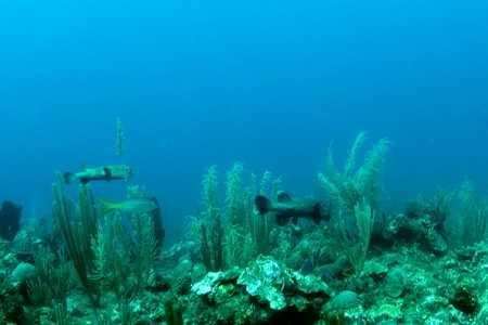 Porcipine Puffer Fish.jpg
