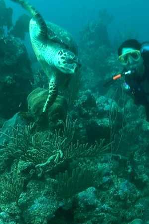 Karen & Turtle 1.jpg