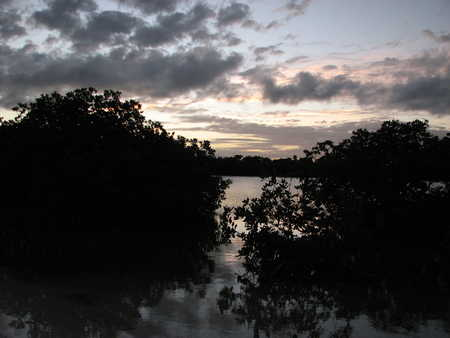 Another Mangrove Sunset