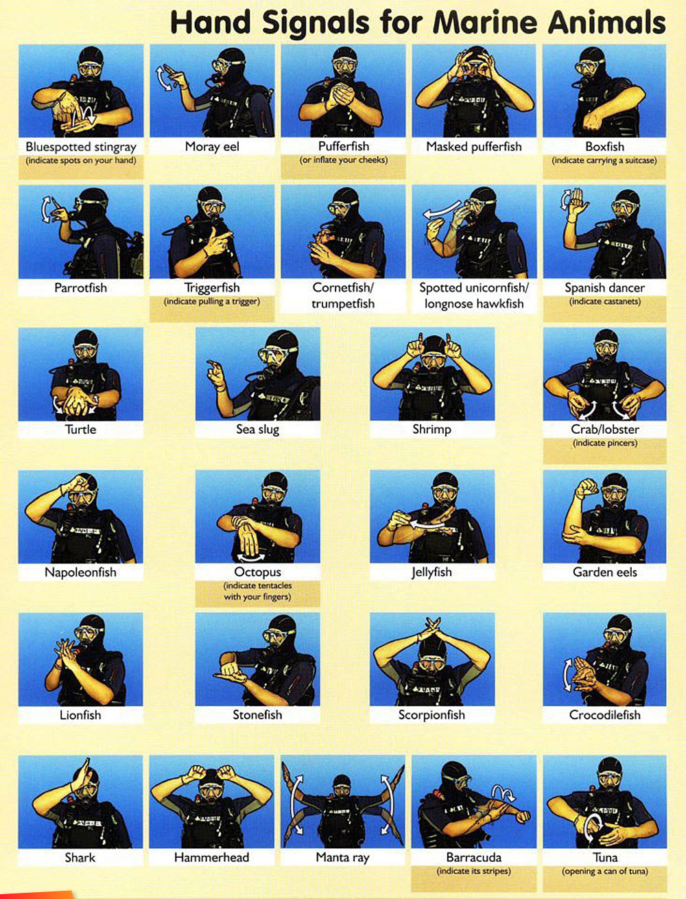 Image result for scuba hand signals for marine life