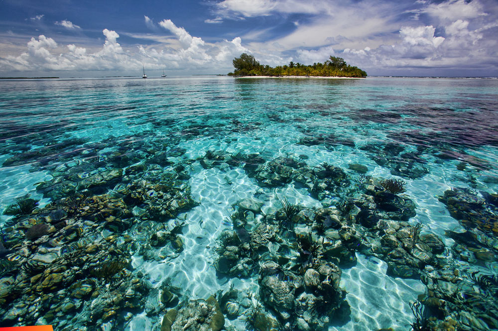 What a Catch, Donnie Coral-Reefs-of-South-Water-Caye
