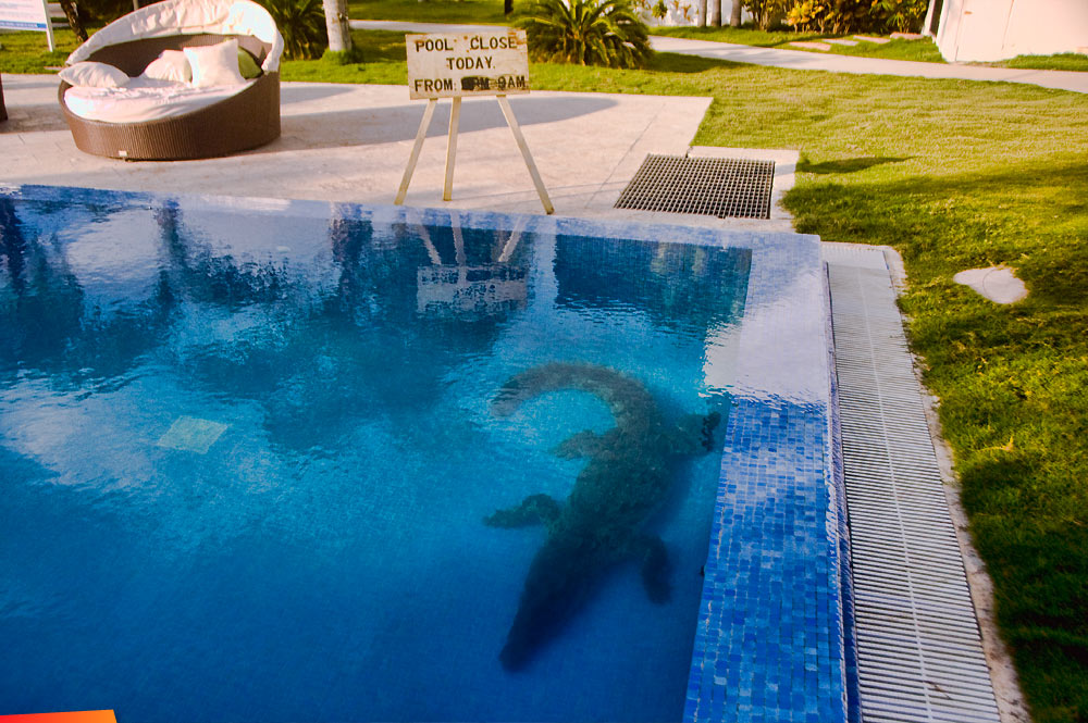 Crocodile_In_The_Swimming_Pool_1.jpg