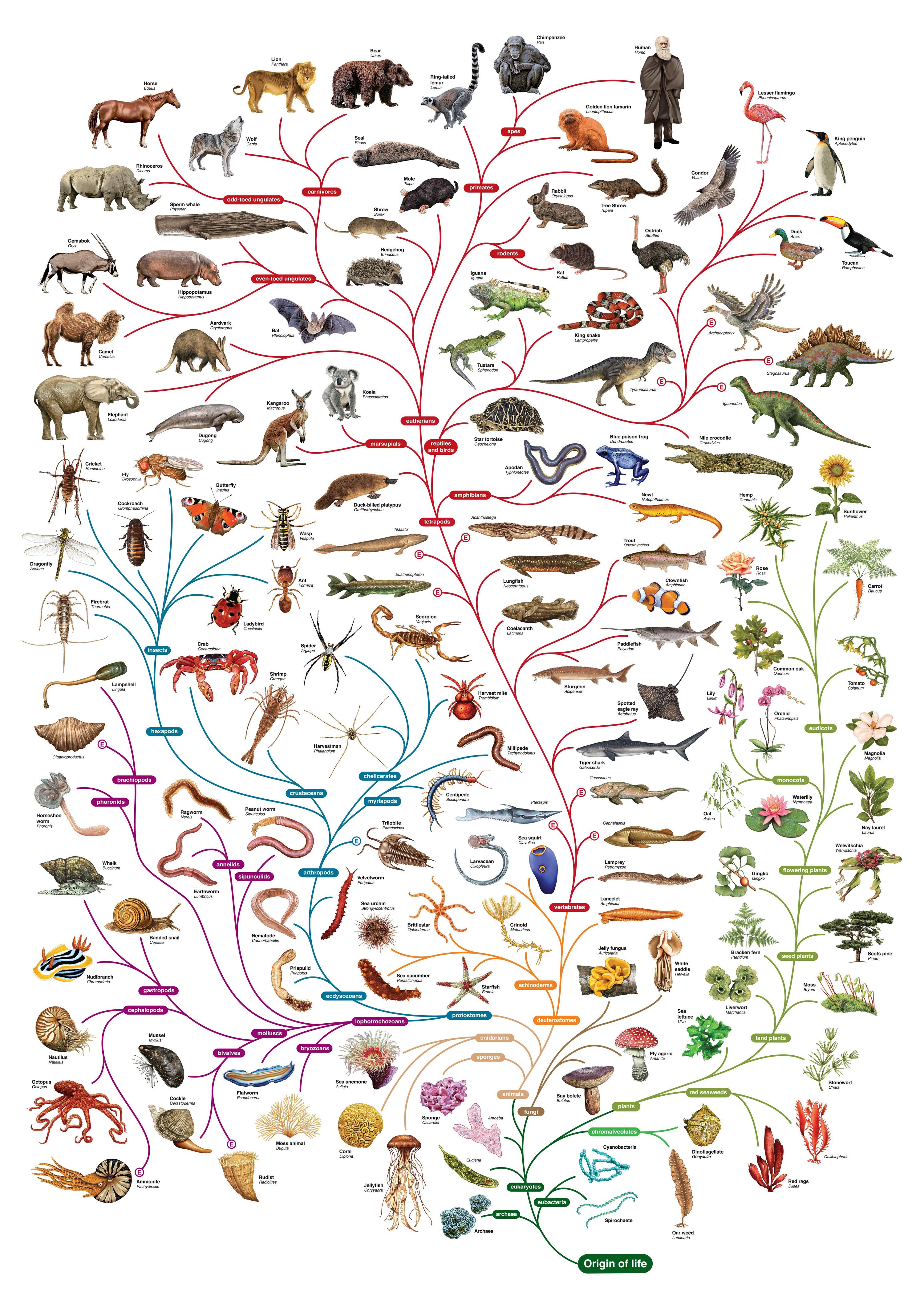 evolution of animals - 736×1086