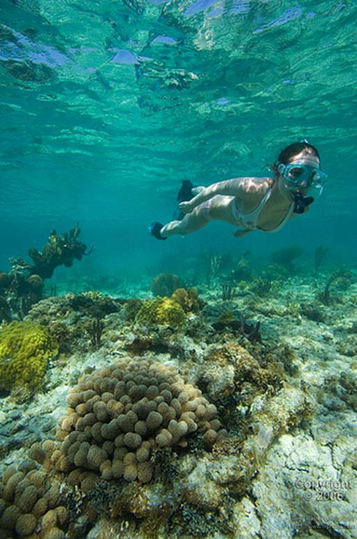 Snorkeling At South Water Caye, Belize