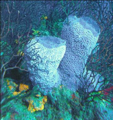 All About Sponges And More Belize Barrier Reef