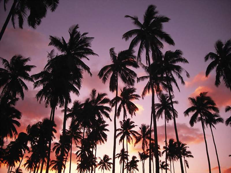 palm trees wallpapers. Pictures of Belize, Ambergris Caye, San Pedro Town, Belize, Wallpaper for